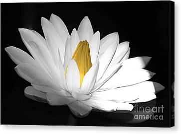 Pristine Canvas Print by Cindy Manero