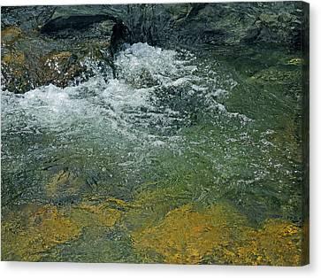 Canvas Print - Pristine by Lynda Lehmann