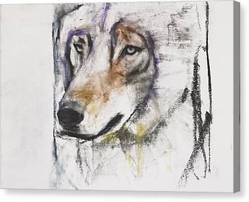 Processo Al Lupo Canvas Print by Mark Adlington