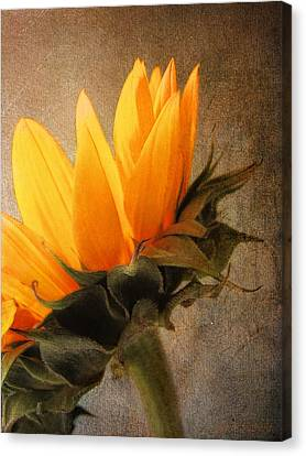 Canvas Print featuring the photograph Profile by John Rivera