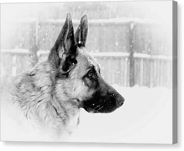 Profile Of A German Shepherd Canvas Print