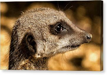 Canvas Print featuring the photograph Profile Of A Meerkat by Chris Boulton