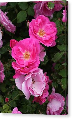 Canvas Print featuring the photograph Profusion Of Pink by Doris Potter