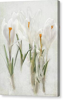 Promise Of Spring Crocus Canvas Print by Barbara McMahon