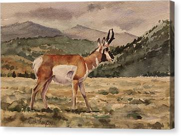 Pronghorn Antelope Canvas Print - Pronghorn Antelope In Yellowstone by Keith Thompson