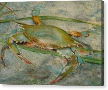 Canvas Print featuring the painting Propa Blue Crab by Sibby S
