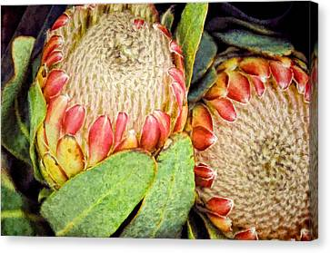 Proteas II Canvas Print by Jan Amiss Photography