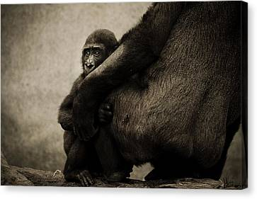 Protection Canvas Print by Animus  Photography