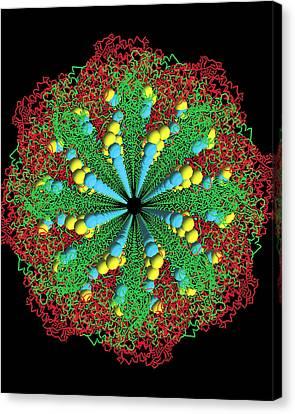 Protein Nanotube Canvas Print by Nasa