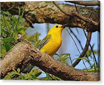Prothonotary Warbler II Canvas Print