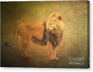 Forelock Canvas Print - Proud Lion by Jutta Maria Pusl