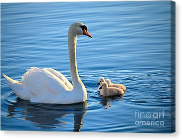 Proud Mother Canvas Print by Deb Halloran