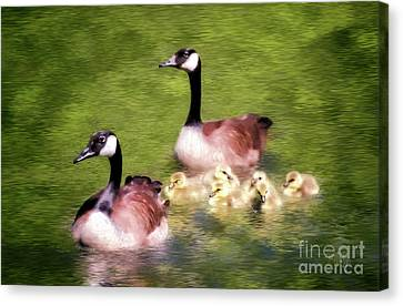 Geese Canvas Print - Proud Parents by Lois Bryan