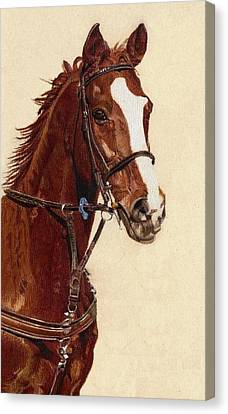 Watercolor. Equine. Bridle Canvas Print - Proud - Portrait Of A Thoroughbred Horse by Patricia Barmatz
