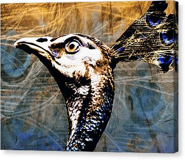 Proud To Be A Peacock Canvas Print by Nannie Van der Wal