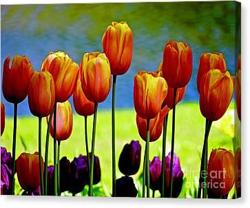 Proud Tulips Canvas Print