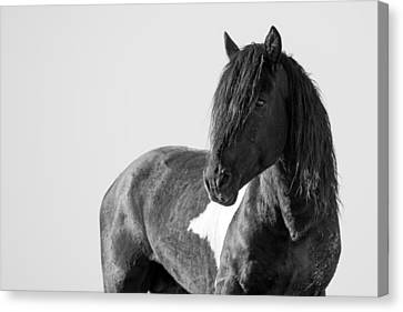 Forelock Canvas Print - Proud Warrior by Sandy Sisti