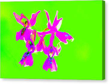 Green Provence Orchid  Canvas Print by Richard Patmore