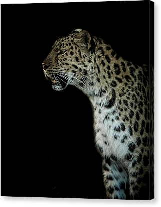 Prowl Canvas Print by Paul Neville