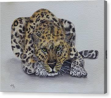 Prowling Leopard Canvas Print