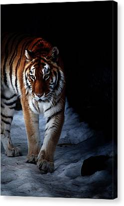 Canvas Print - Prowling Out Of The Shadows by Karol Livote
