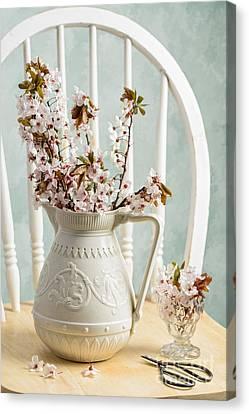 Prunus Spring Blossom Canvas Print by Amanda Elwell