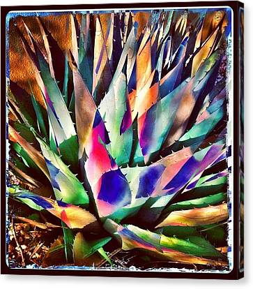 Instamood Canvas Print - Psychedelic Agave by Paul Cutright