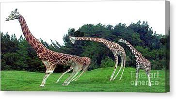 Canvas Print featuring the digital art Psychedelic Giraffes by Merton Allen