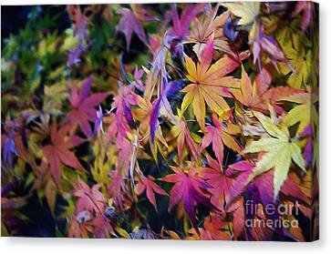 Psychedelic Maple Canvas Print by Kaye Menner