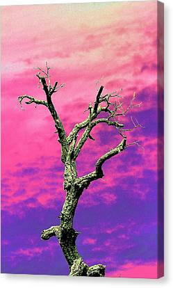Psychedelic Tree Canvas Print by Richard Patmore