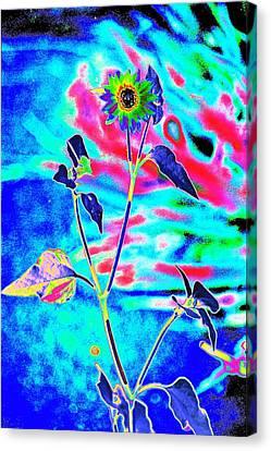Psycho Daisy Canvas Print by Richard Henne
