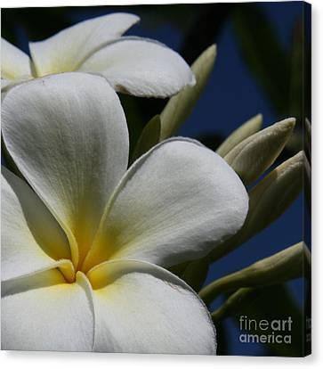 Pua Lena Pua Lei Aloha Tropical Plumeria Maui Hawaii Canvas Print by Sharon Mau