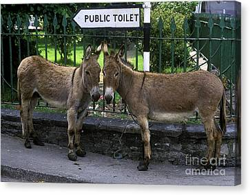 Public Toilet Canvas Print
