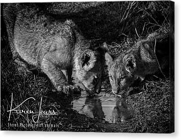 Canvas Print featuring the photograph Puddle Time by Karen Lewis