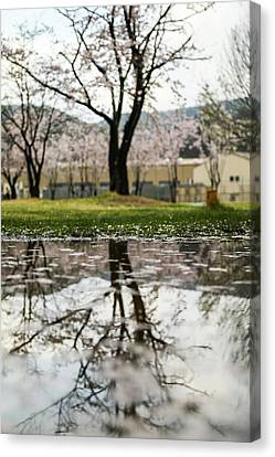 Puddle With Tree Canvas Print by Hyuntae Kim
