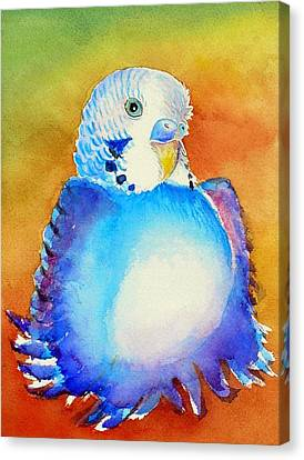 Pudgy Budgie Canvas Print by Patricia Piffath