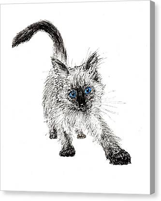 Pudsquiz Belina On The Prowl  Canvas Print by Vincent Alexander Booth