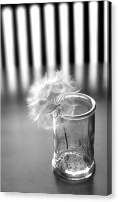 Canvas Print featuring the photograph Puff Ball by Diane Alexander