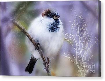 Puffball  Canvas Print