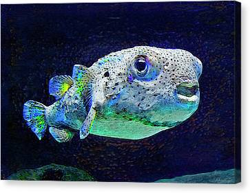 Puffer Fish Canvas Print by Jane Schnetlage