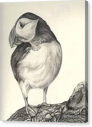 Puffin Canvas Print by Aurora Jenson