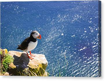 Puffin In Iceland - King Of The Hill Canvas Print