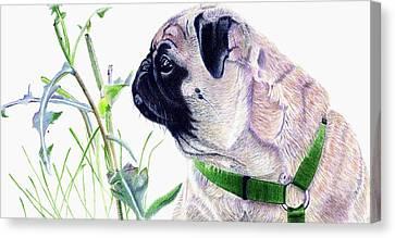 Pug And Nature Canvas Print by Patricia Barmatz
