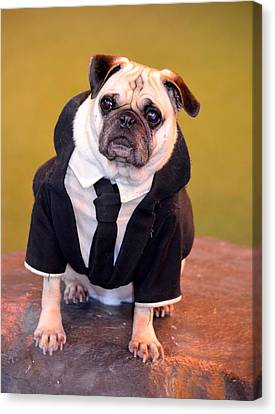 Pug As Frank From Men In Black Canvas Print