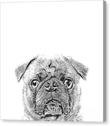 Pug Dog Sketch Canvas Print
