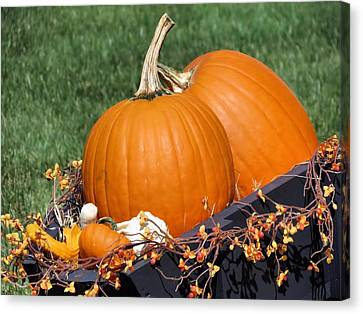 Pumpkin And Bittersweet Canvas Print by Janice Drew