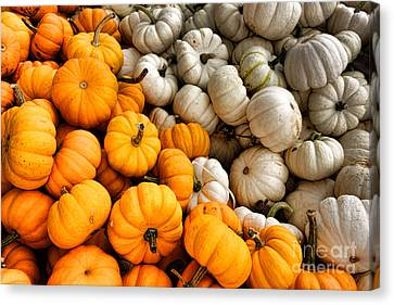 Pumpkin And Pumpkin Canvas Print by Olivier Le Queinec