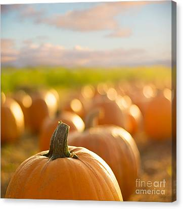 Pumpkin Patch Canvas Print by Alissa Beth Photography