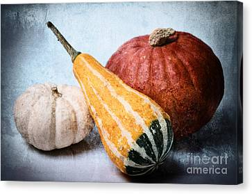 Pumpkins Canvas Print by Angela Doelling AD DESIGN Photo and PhotoArt