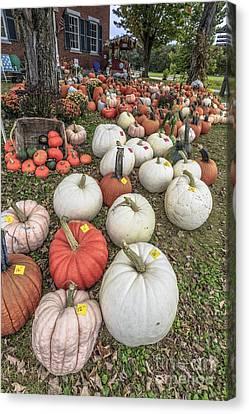 Pumpkins For Sale Canvas Print by Edward Fielding